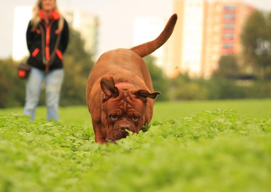 Los mejores parques para ir con tu perro por Barcelona